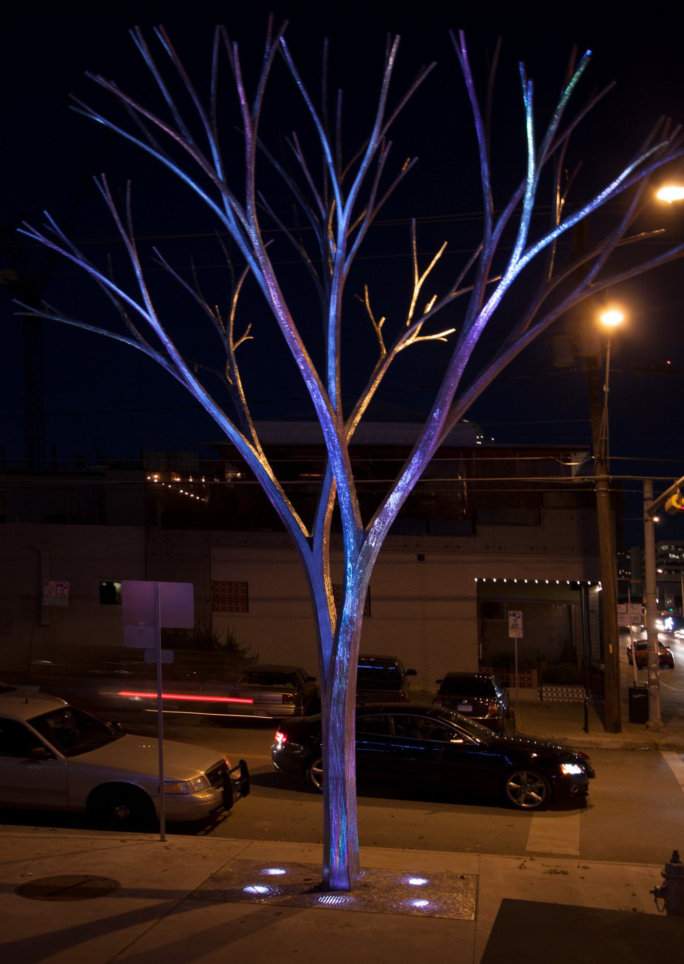 Austin tree night